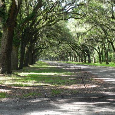 Driveway into Wormsloe State Park Savannah, GA