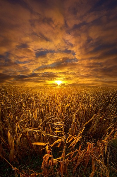 Beyond The Harvest