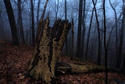 Stump and a fallen trunk on a early morning wander