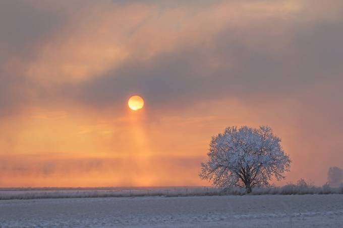 Daybreak on Frosty Tree by jimstennette - A Lonely Tree Photo Contest