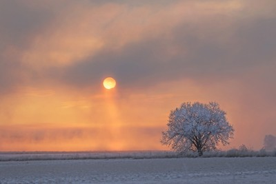 Daybreak on Frosty Tree