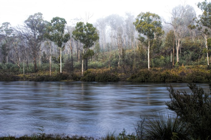 With a slow shutter the river took on a silver look. The mist is slowly rising from the dense bush and the white bark of the Gumtrees shine out.
