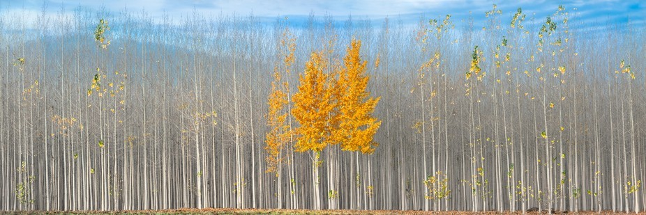 Finding tree farms in eastern Oregon is not too difficult, the region is full of them. So much so...