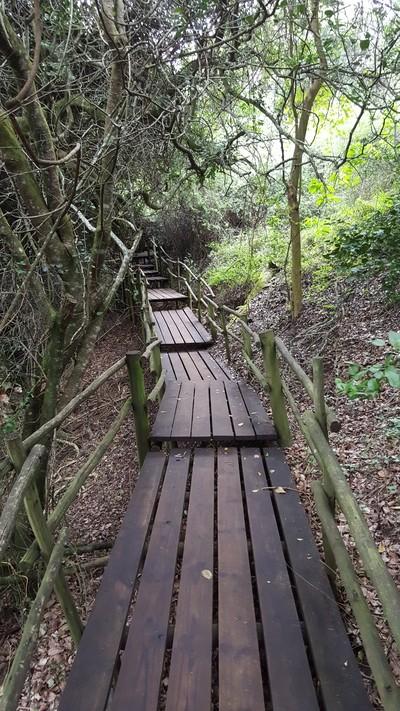 Path Through Nature