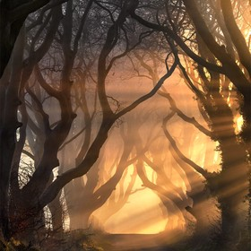 Beautiful Light filters through the Dark Hedges, Northern Ireland.