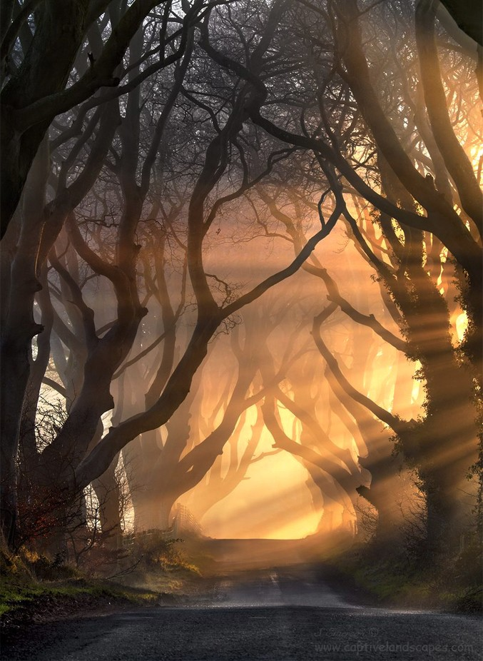 Hedges of Light by stephenemerson - Mist And Drizzle Photo Contest