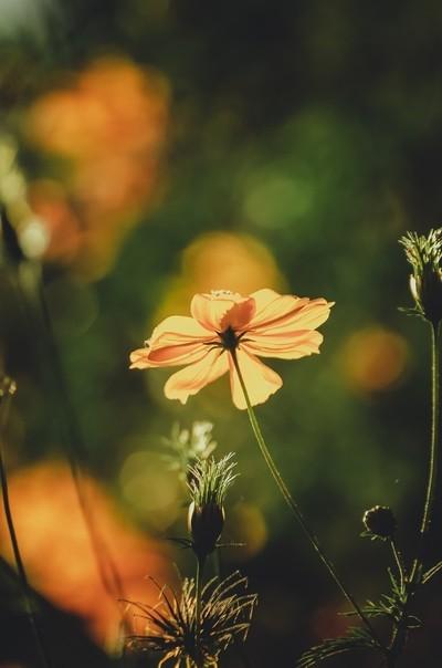 Autumn Colors !!