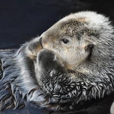 zeeotter