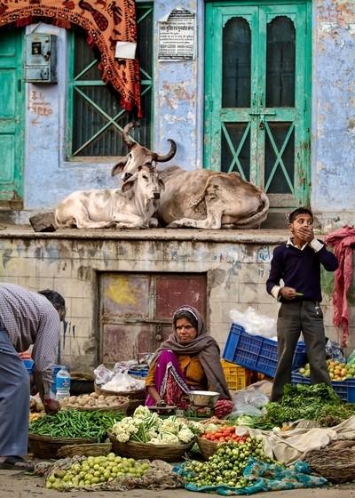 Pushkar market scene