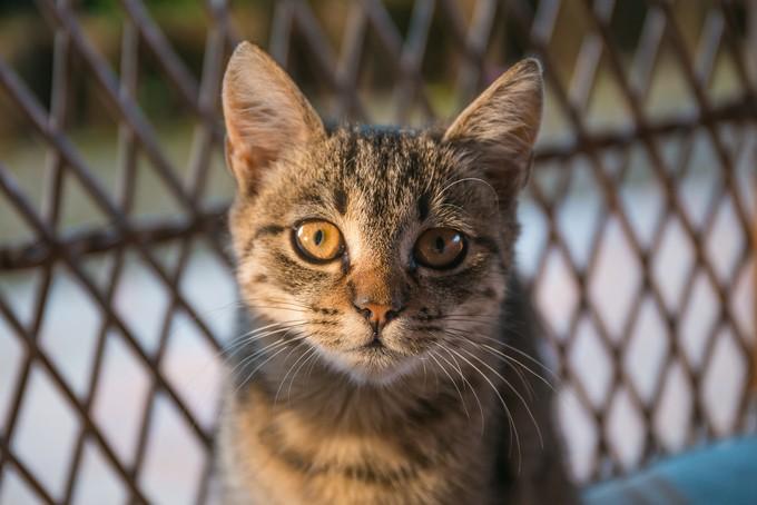 Cat Diaries II by srdjanvujmilovic - Cute Kittens Photo Contest