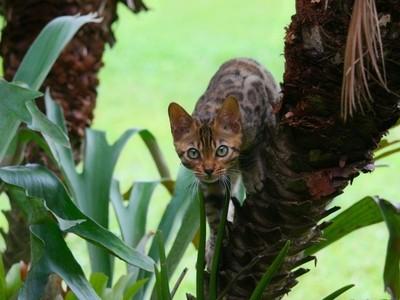 Loki on the Prowl