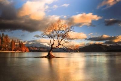 The Wanaka Tree at Sunrise