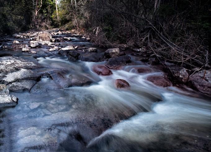 Unnoticed stream in the Tassie bush.
