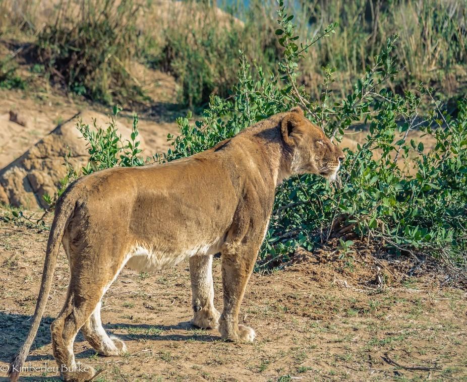 Taken in Kruger National Park
