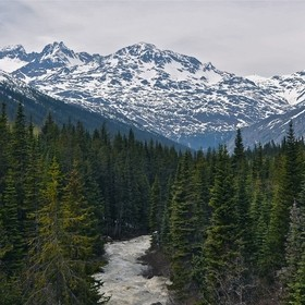 We visited Alaska and took the train up a mountain pass when I saw this stream rushing through the trees and on down into the valley. I just had ...