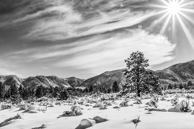 DSC_7658 - Winter Wonder Land