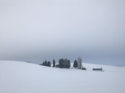 December Snow Scene