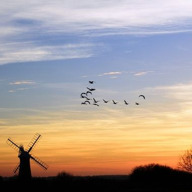 Geese flying over St Benet's Mill at sunset on the Norfolk Broads.