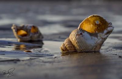 Shells003
