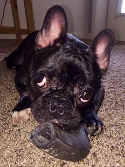 Meet Truffles
