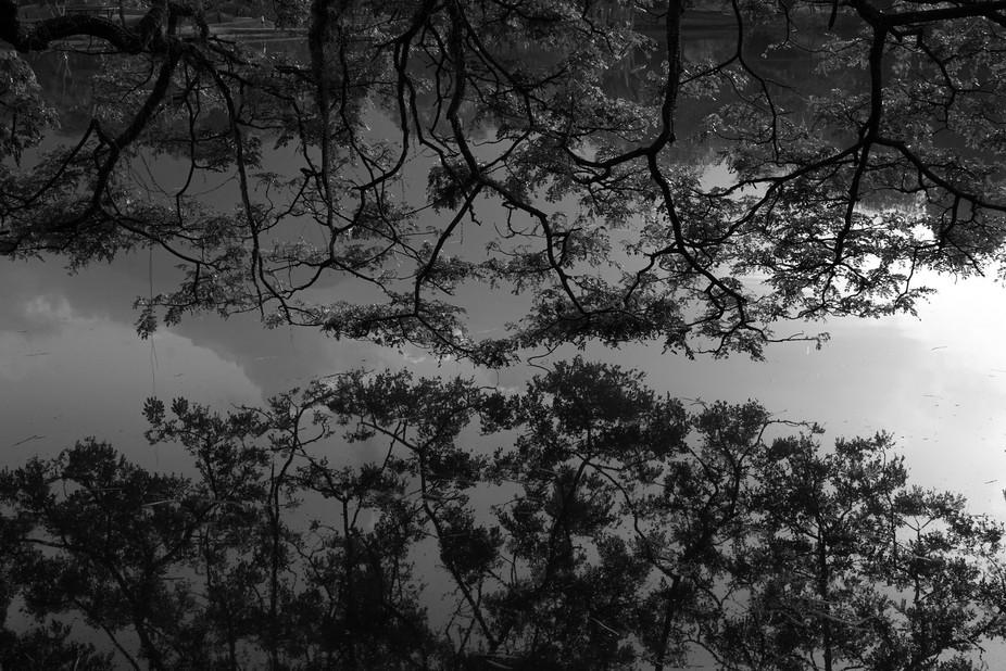 Perfect Mirror Image