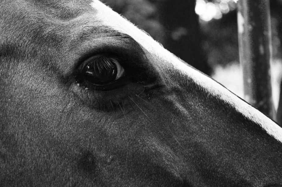 Close up of a horse's eye in the Bangladesh national zoo