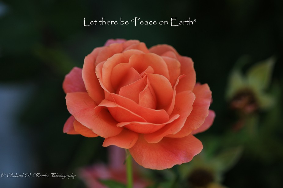 """Let there be """"Peace on Earth"""""""