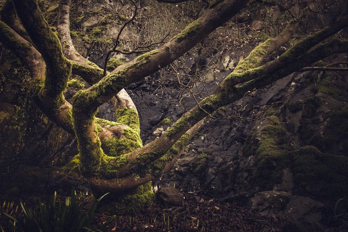 Moody Moss by natosed - Rule Of Thirds Photo Contest v3