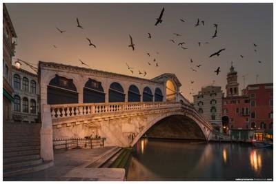 Hungry seagulls awaiting for a breakfast (Realto bridge, Venice)