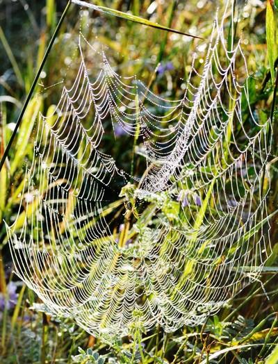 spider craftwork