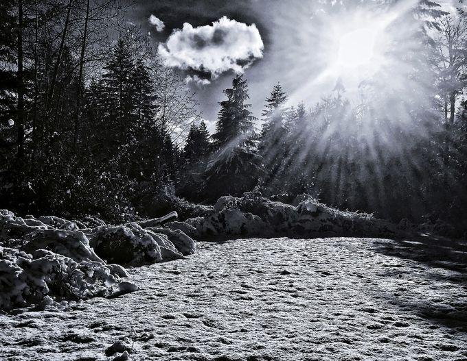 Winter Flare b/w