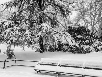 B-W  Snow in Central Park