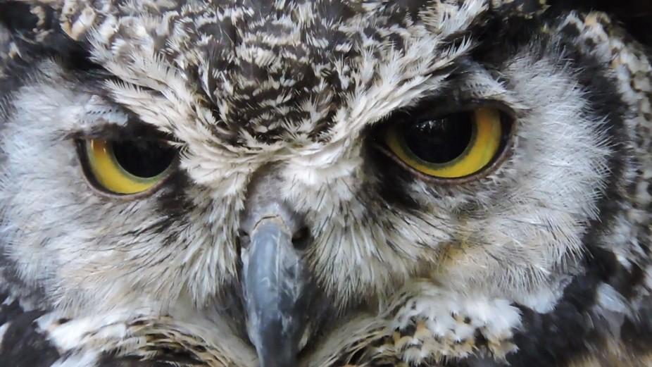 Owl's sharp eyes