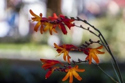 florecitas selvaticas