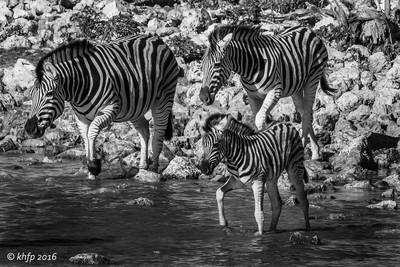 Zebras @ Okaukuejo 2
