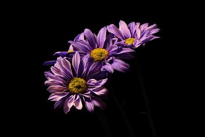Floral Steps 1031
