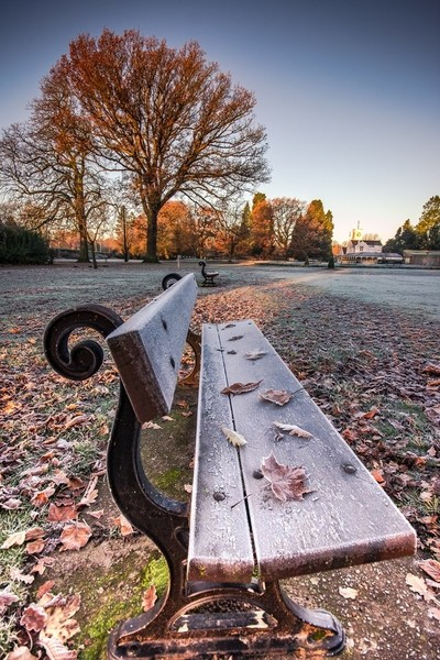 Autumn Leaves & Frosted Benches (Portrait).