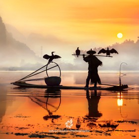 For thousands of years, fishermen have used trained cormorants to fish the rivers and lakes of China. To control the birds, the fishermen tie a s...