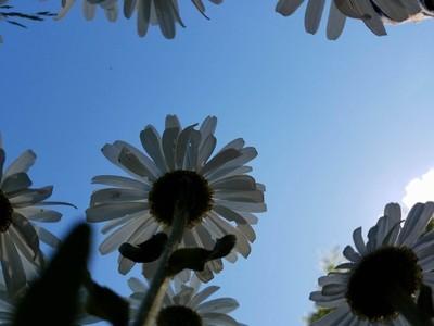 Below a Daisy