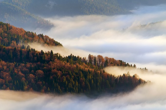 Forest in fog by strOOp - Mist And Drizzle Photo Contest