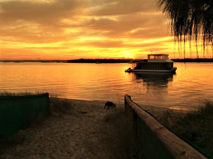 Dog is waiting for his owner to catch up on their early morning run along the beach at sunrise.