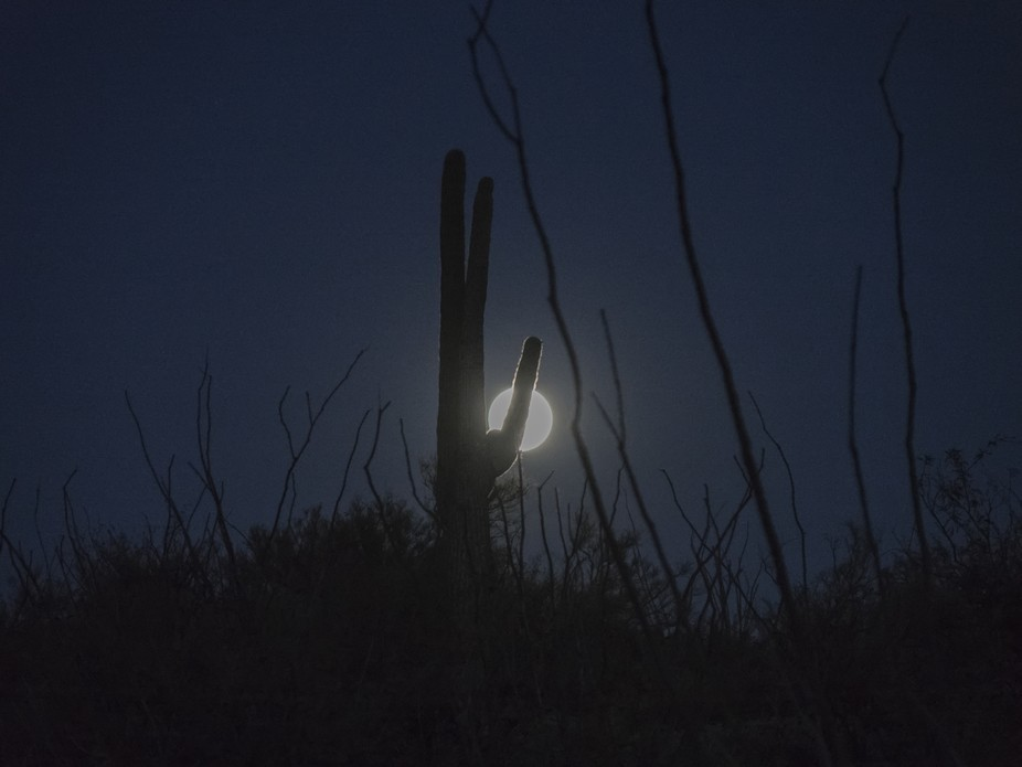 Supermoon November 2016 in the desert with a saguaro cactus silhouette.