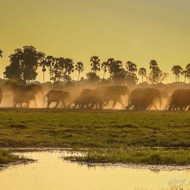 Crossing the Okavango Delta