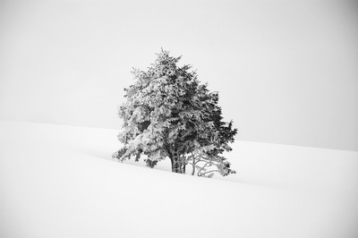 A tree in the snow.