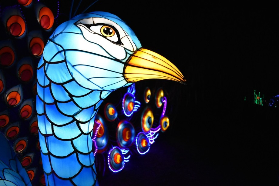 Taken during the Magic Lantern Festival in Birmingham Botanical Gardens. This picture shows the a...