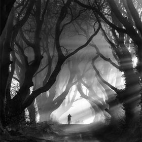 The Dark Hedges in County Antrim, Northern Ireland. Mysterious intertwining beech trees that over time have created this eerie avenue of trees. B...