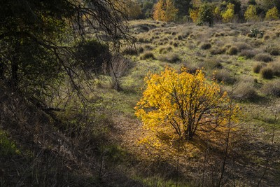 Autumn Light over Santiago Creek