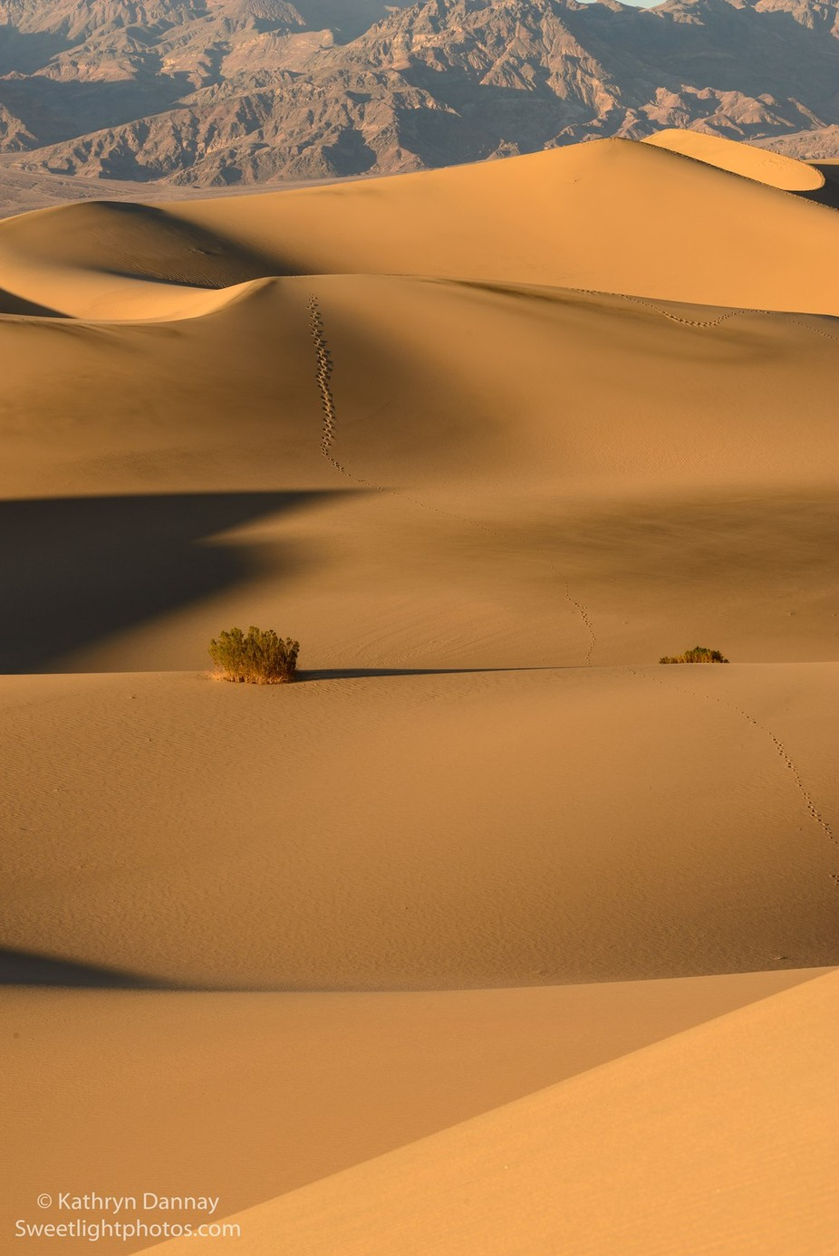 Desert Abstracts by kathrynsklenakdannay - Landscapes And Sand Photo Contest