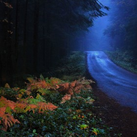 Driving very early, in the morning, on a mountain backroad through dense woods and fog, the headlamps of the car illuminated these ferns. The lea...