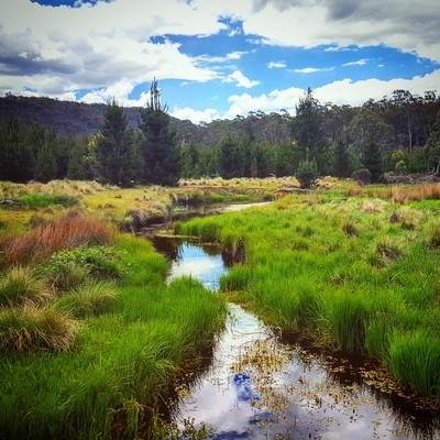 Reflections in a Bush Creek